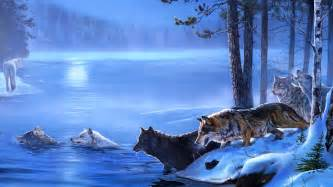 wolf wallpaper and background 1420x800 id 342481