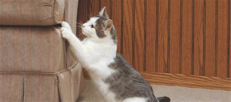 stop  cat  scratching furniture dogs cats pets