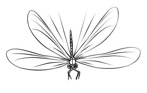 free dragonfly coloring page 16