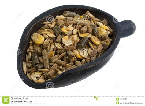 alimentazione cavallo paletta preparato dell alimentazione cavallo