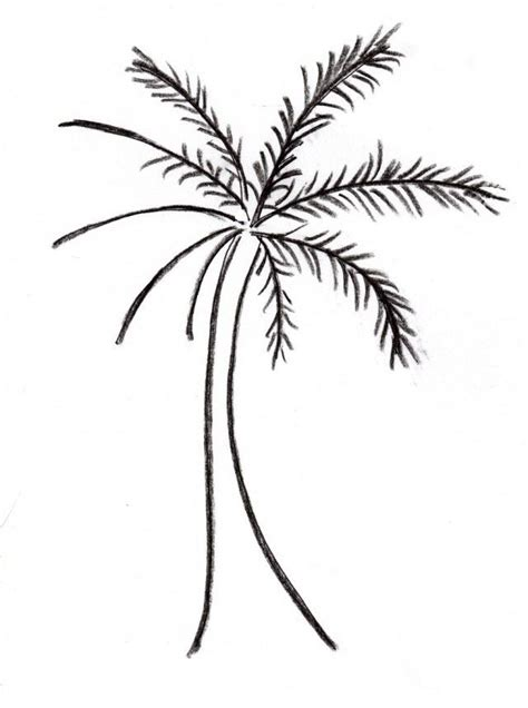palm tree template coloring home