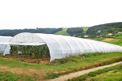 Simple Home Design News by Products Asthor Greenhouses