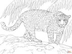 jaguar coloring pages great jaguar coloring page free printable coloring pages