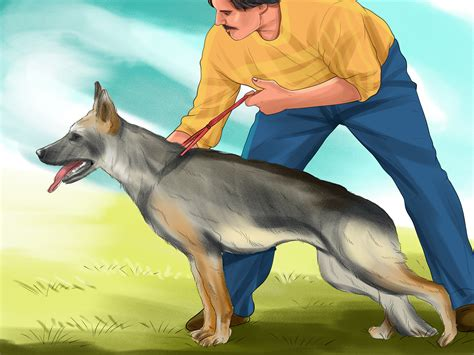 nigel my family and other dogs books 3 ways to decide whether to get a german shepherd wikihow
