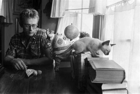 Iphone 66s Pets Rock Hepburn cat throughout history