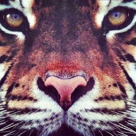 imagenes hipster animales imagenes tumblr de tigres imagui
