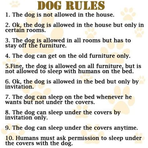dog house rules dog rules they fade over time doggies com dog blog