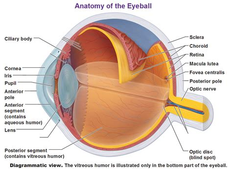 ophthalmic imaging posterior segment imaging anterior eye photography and slit l biomicrography applications in scientific photography books the eye and vision
