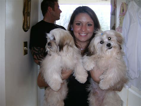 shih tzu puppies panama city fl puppy photos from 2008
