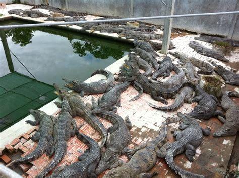 Crocodile Farm Siem Reap - Asia Travel Agencies