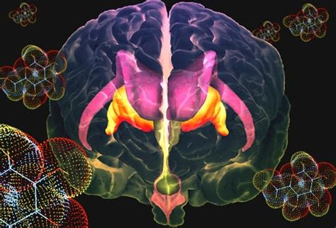 Does Pinella Detox Brain by Sugar Addiction Facts Cravings Sugar And More In