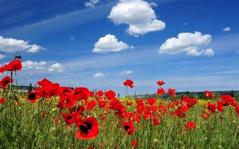 immagini desktop primavera fiori 1440 x 900 primavera sfondi fiori immagini di sfondo