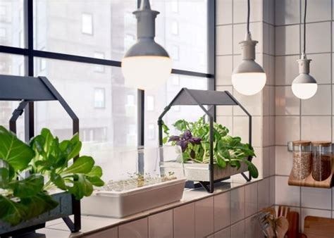 agricultural futures  home aeroponic gardens
