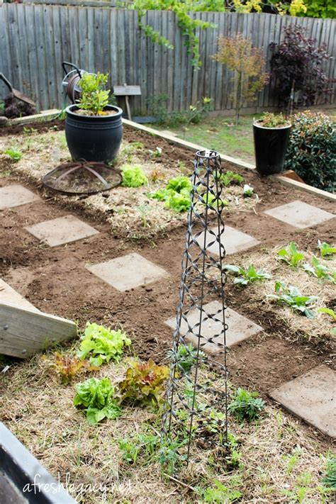 vegetable garden set up