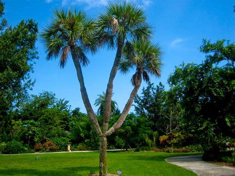 Heathcote Botanical Gardens by Heathcote Botanical Gardens Florida Hikes