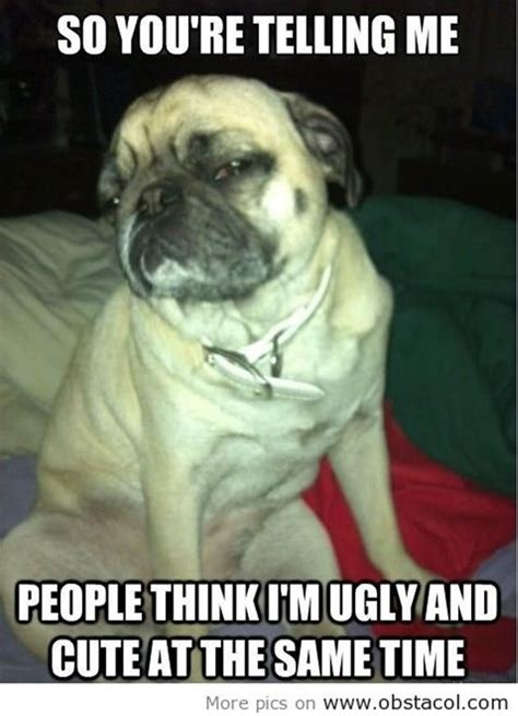 why do pugs their paws 26 best images about pug memes on pug meme animal funnies and animated gif