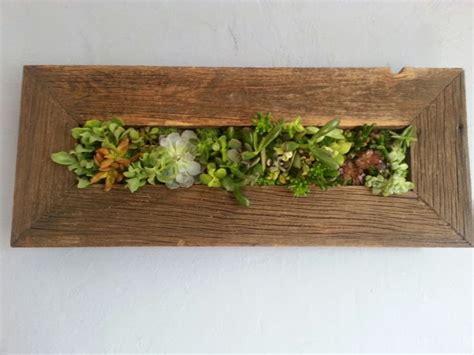 Buy Garden Stuff Living Succulent Wall Reclaimed Wood Hanging