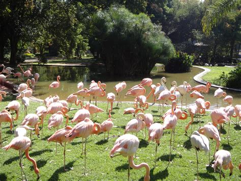 Zoological Garden by National Zoological Gardens Zoo In Pretoria Thousand