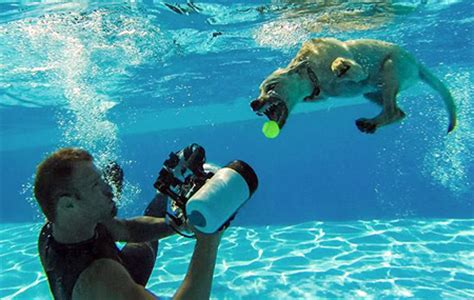 puppies underwater underwater puppies