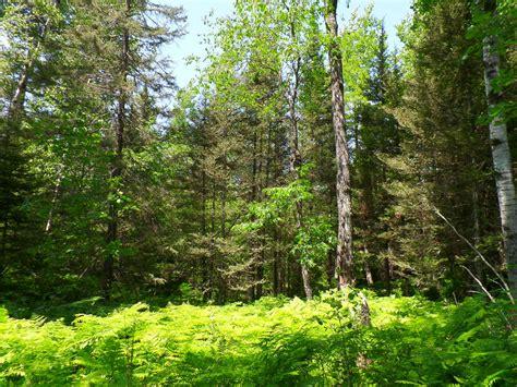 woodlands backyard woodland backyard 2 by yackemflaber on deviantart