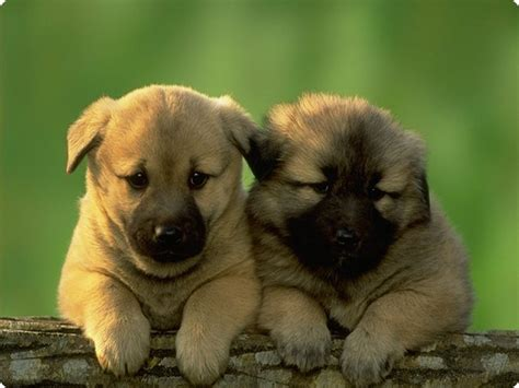 really puppies thursday