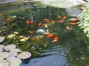Backyard Crawfish Farming Alpine Fishery Wholesalers Of Fish For Aquaponics Fishing