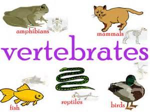 Vertebrates natural science 1