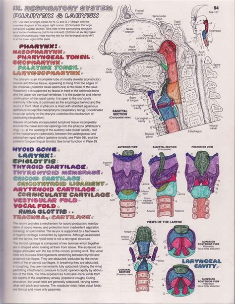 anatomy colouring book book depository vocal anatomy 101 an introduction the liberated voice