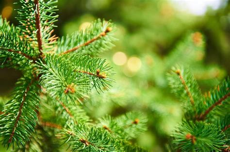 plant your christmas tree in the garden home wizards