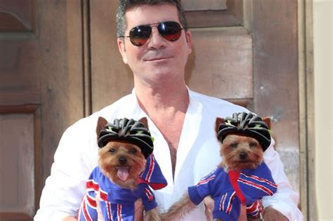 simon cowell dogs simon cowell gets mini helmets for his dogs squiddly and diddly to protect them from