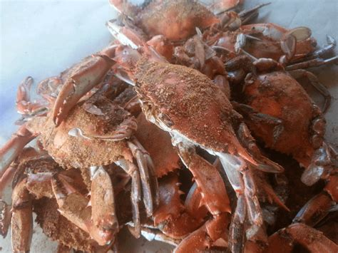 crab boat rental ocean city md 5 tips for crabbing with a hand line oceancity