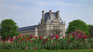 tulips in tuileries gardens
