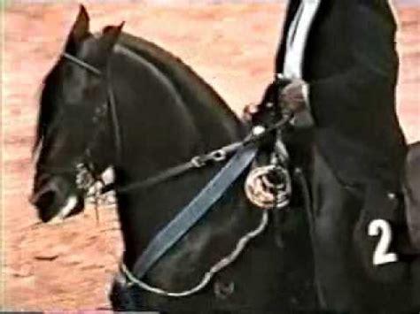 caballo de la sabana youtube mensaje de san esteban en la mundial de caballos de paso