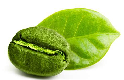 Berapa Green Coffee dimana beli green coffee bean asli kopi hijau asli