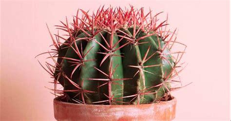 cosas   sabias de los cactus