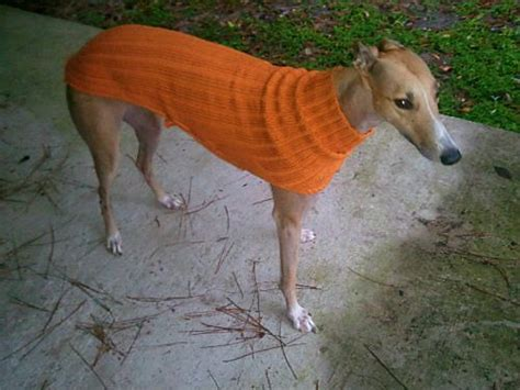 knitted greyhound sweater pattern ravelry project gallery for side button greyhound sweater