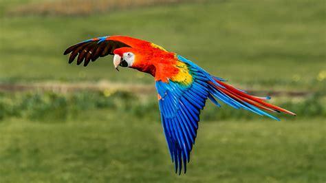 types  parrots  pets nurturing