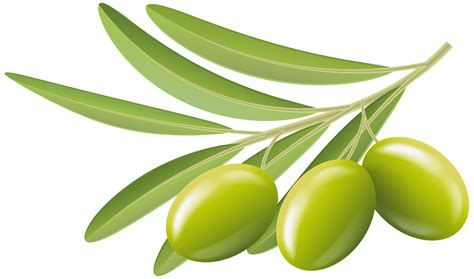 Olive Green Clipart Clipground