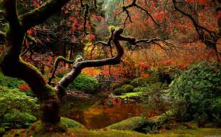 herbst garten japanese garden desktop wallpapers wallpaper cave