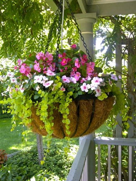 hanging flower garden 25 best ideas about hanging flower baskets on