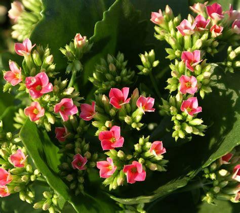 beautiful flower wallpaper flowers for flower lovers beautiful flowers wallpapers