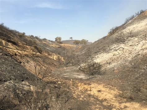 Ventura Botanical Gardens Climate Change And The California Wildfires