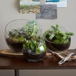 how to make a s day terrarium
