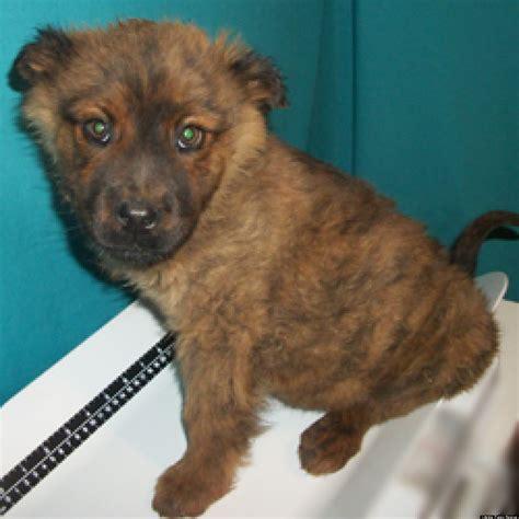 lifeline puppy lifeline puppy rescue s adoptable pets this week photos huffpost