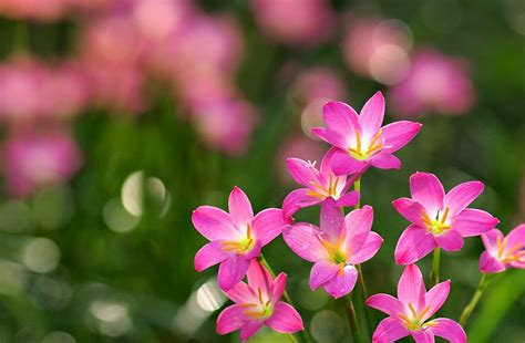 any design of flowers 20 fabulous pink flower backgrounds free premium