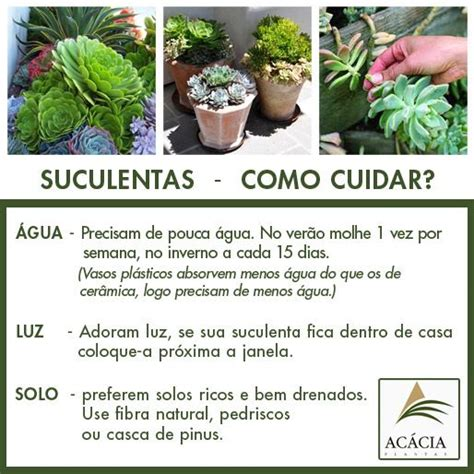 Tropical Indoor Plant Identification - suculentas a planta da moda n 227 o d 225 trabalho saiba como cuidar plantas como cuidar