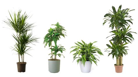 types of indoor plants 15 air purifying plants to add to your apartment or home