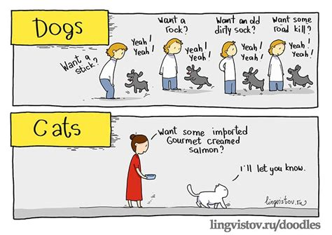difference between and dogs the differences between cats and dogs