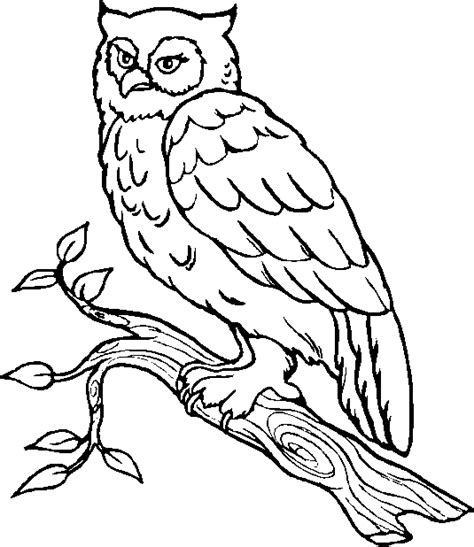 printable owl to color owl coloring pages free printable pictures coloring