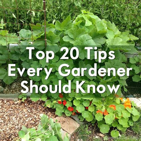 top  tips  gardener   northwest edible life